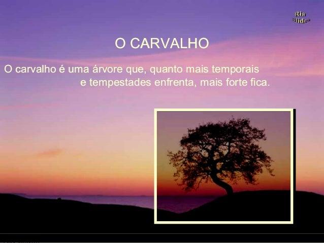 O carvalho é uma árvore que, quanto mais temporaisO carvalho é uma árvore que, quanto mais temporais e tempestades enfrent...