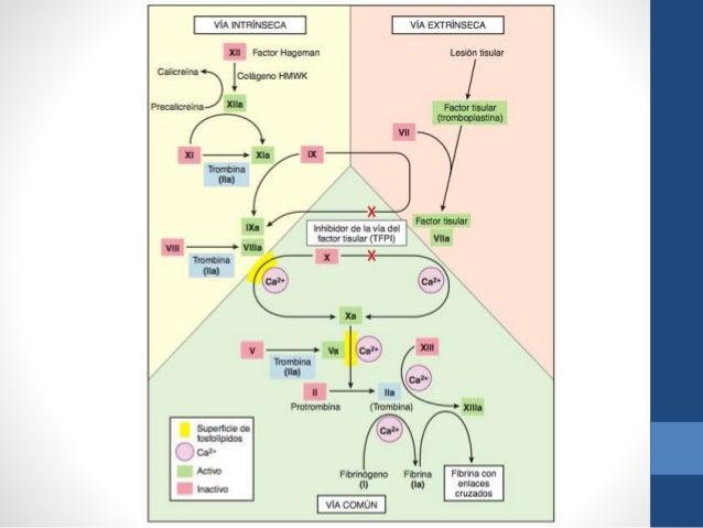 funcion principal de los esteroides