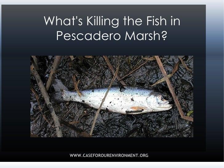What\'s Killing the Fish in Pescadero Marsh?