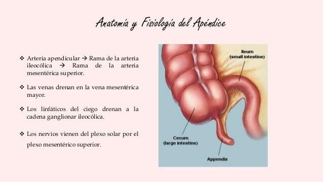 Fisiologia Del Riñon Pdf