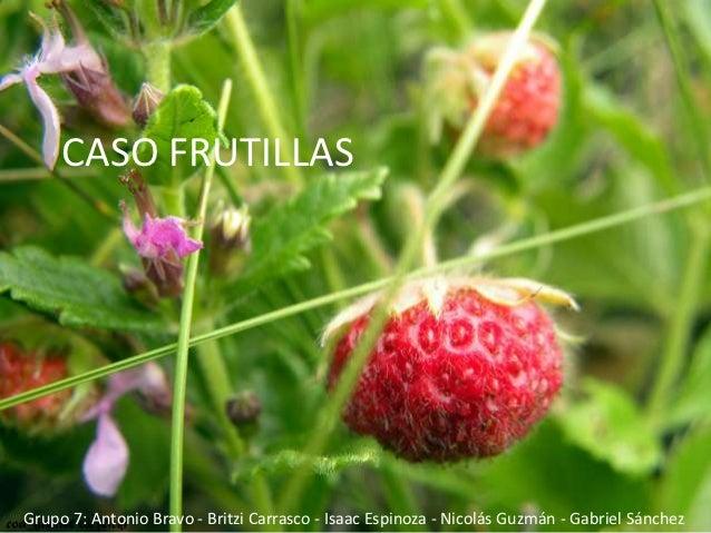Caso frutillas   grupo 7