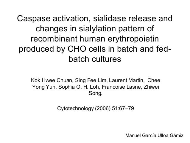Caspase activation, sialidase release and changes in sialylation pattern of recombinant human erythropoietin produced by C...