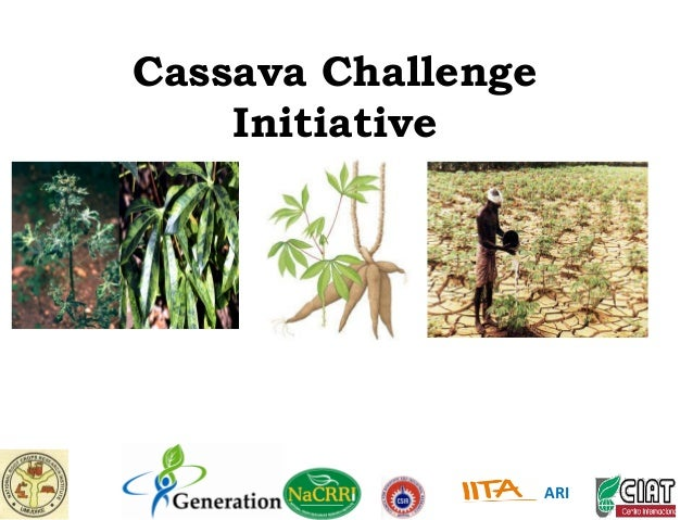 GRM 2011: Improving cassava to withstand drought and disease in Africa ‒ E Okogbenin