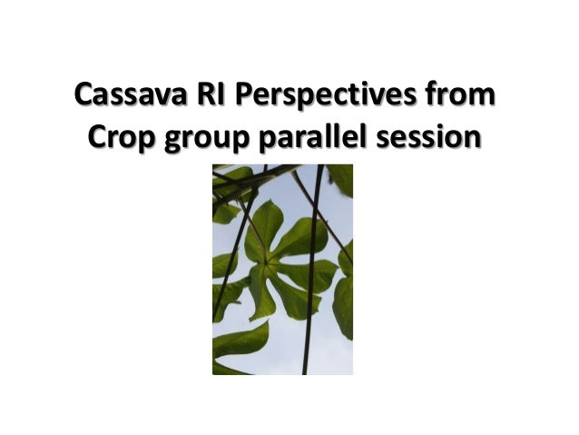Cassava RI Perspectives from Crop group parallel session