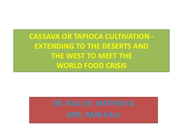CASSAVA OR TAPIOCA TO FEED THE HUNGRY MILLIONS - EXTENDING CASSAVA  CULTIVATION EVEN  IN THE WEST AND THE DESERT REGIONS