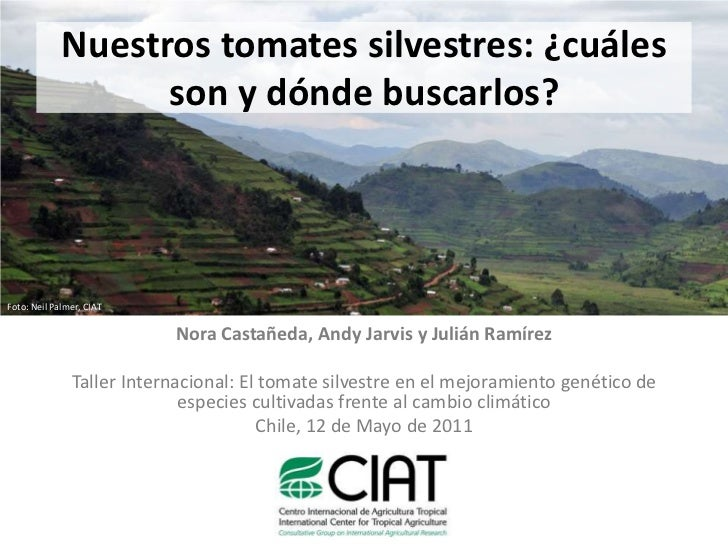 Nuestros tomates silvestres: ¿cuáles son y dónde buscarlos?<br />Foto: Neil Palmer, CIAT<br />Nora Castañeda, Andy Jarvis ...