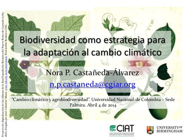 Biodiversidad como estrategia para la adaptación al cambio climático Nora P. Castañeda-Álvarez n.p.castaneda@cgiar.org Pro...