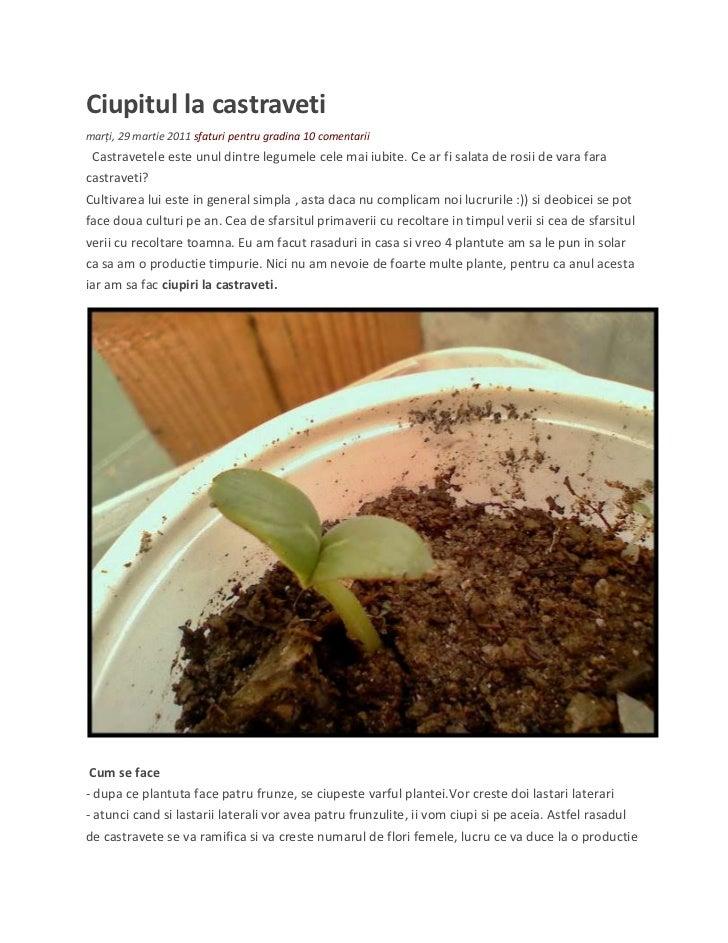 Castravete ciupirea plantei