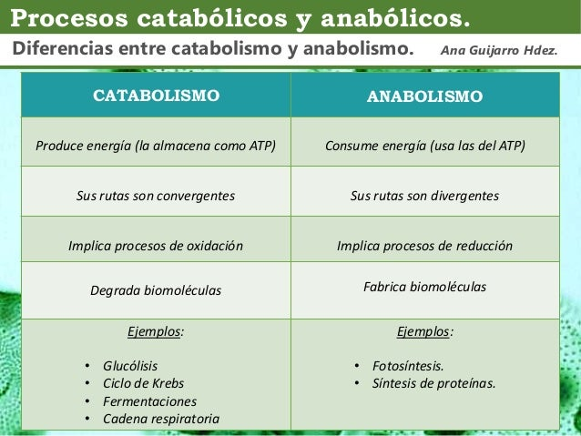 Comparación catabolismo - anabolismo; Ana Guijarro Hernández