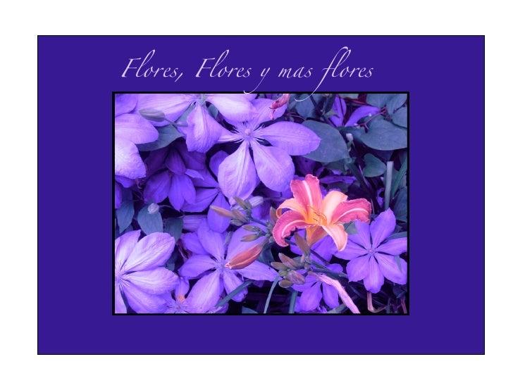 Flores, Flores y mas flores