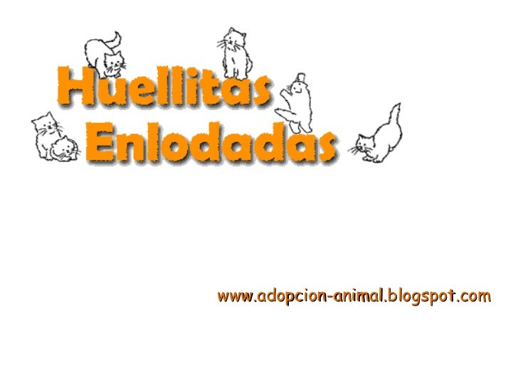 www.adopcion-animal.blogspot.com