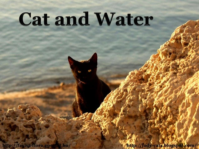CAT AND WATER