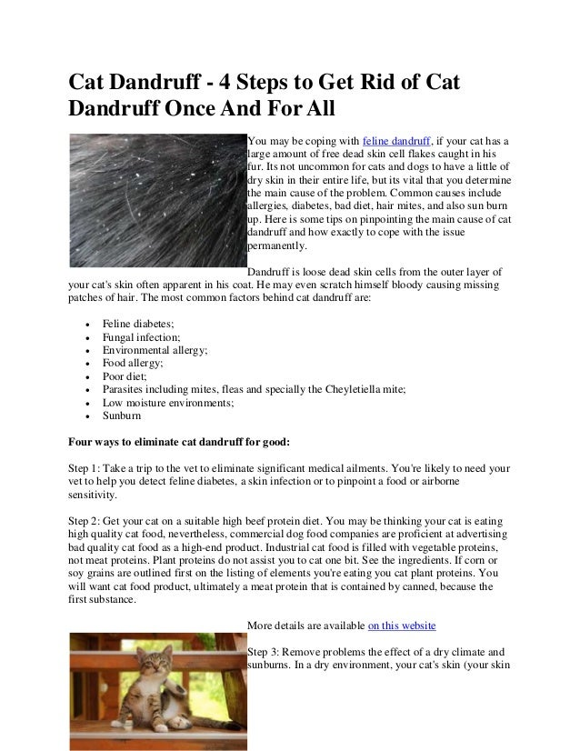 how to clean cat dandruff