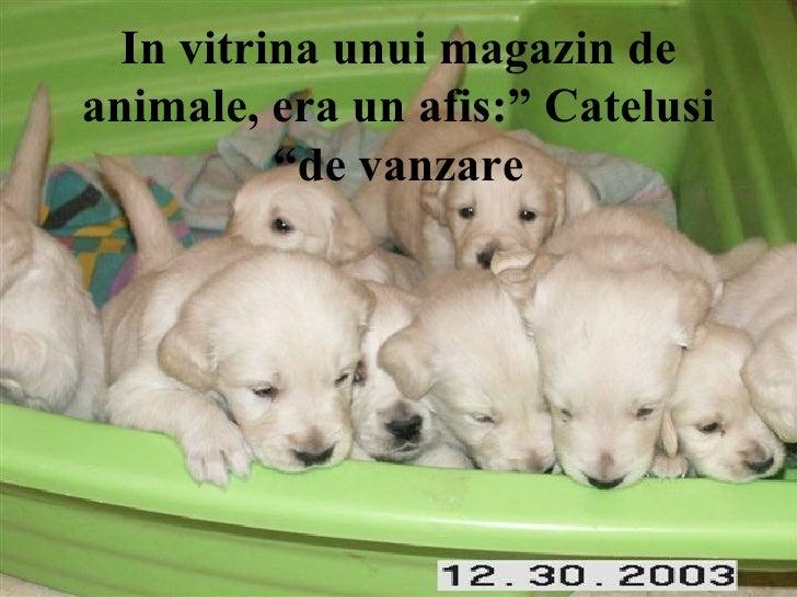 "In vitrina unui magazin de animale, era un afis:"" Catelusi de vanzare"""