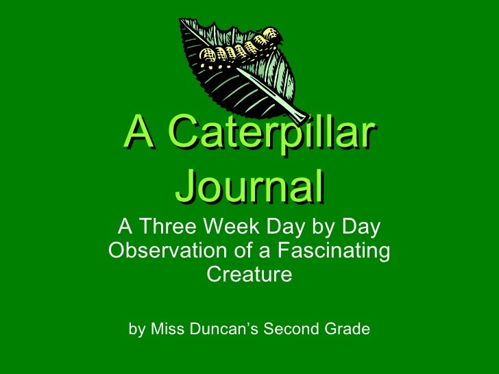 A Caterpillar Journal A Three Week Day by Day Observation of a Fascinating Creature by Miss Duncan's Second Grade