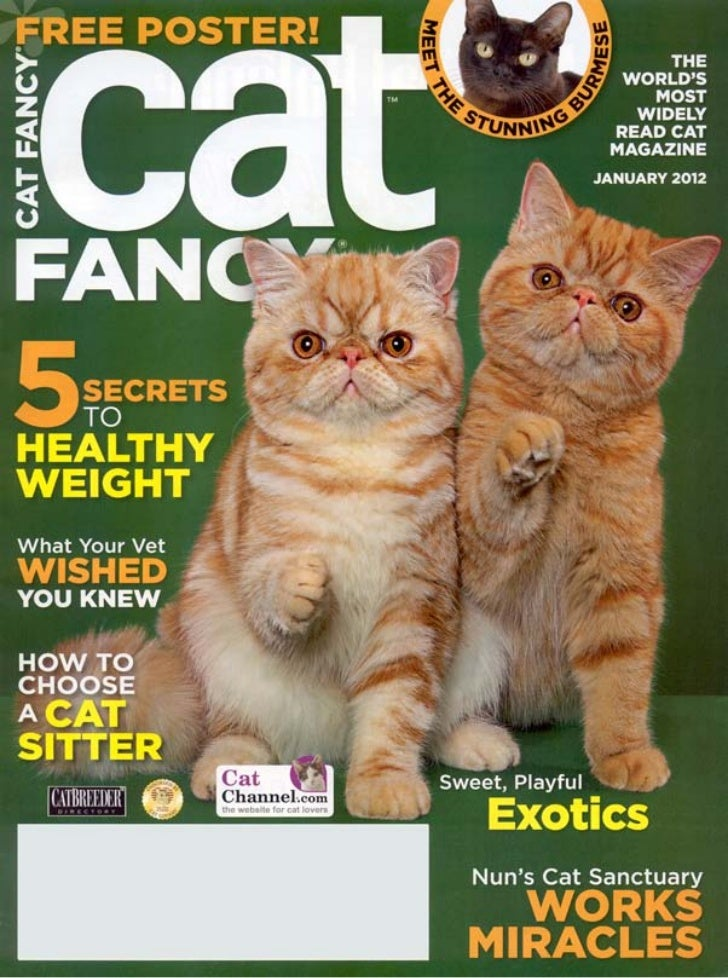 Selecting a Cat Sitter-Cat fancy January 2012
