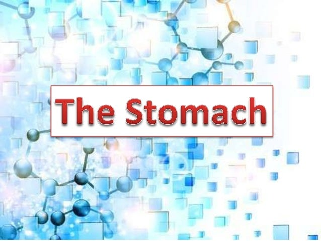 • is an organ between the esophagus and the small intestine lying crosswise in the abdominal cavity beneath the diaphragm ...