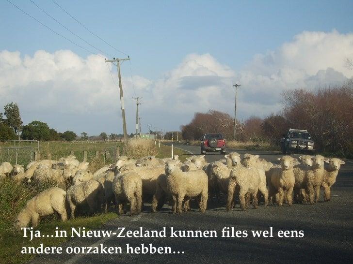 Tja…in Nieuw-Zeeland kunnen files wel eens andere oorzaken hebben…