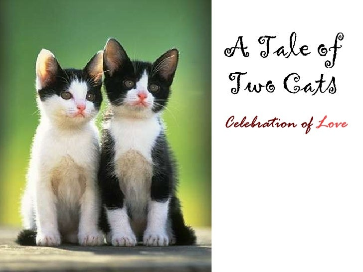 A Tale of Two Cats: Celebration of Love