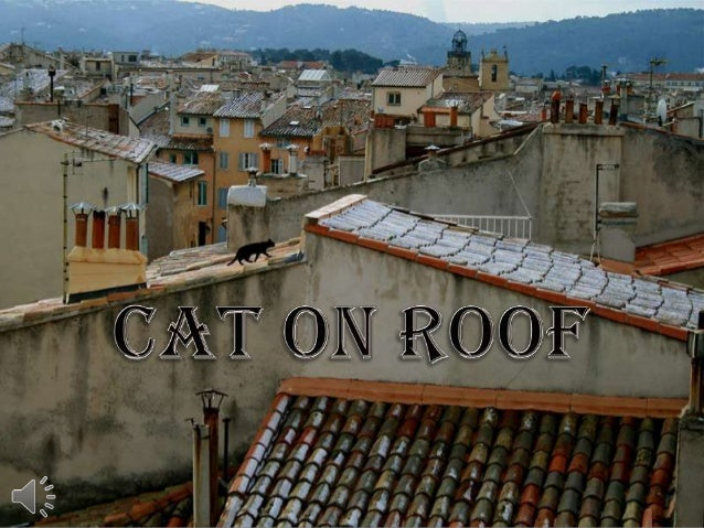 Cat on roof (v.m.)
