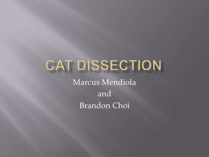 Cat Dissection <br />Marcus Mendiola<br />and<br />Brandon Choi<br />