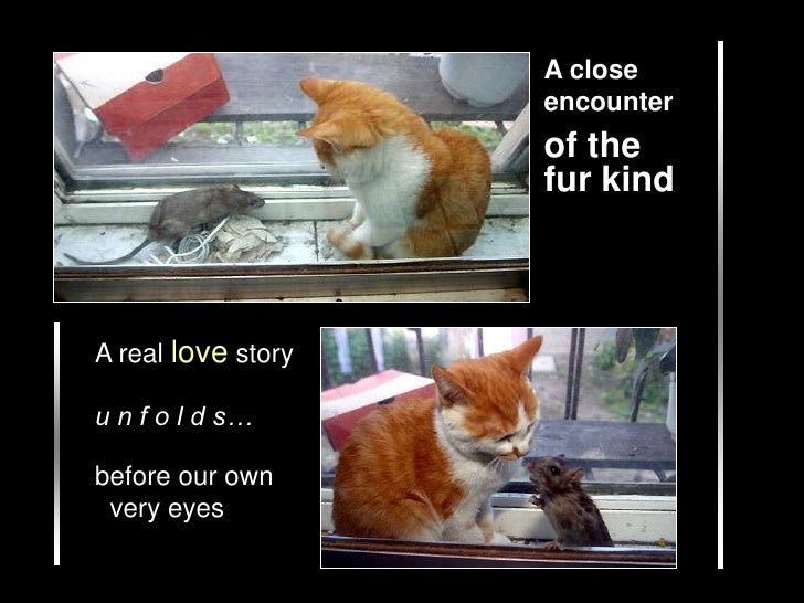 A closeencounter<br />of the fur kind<br />A real love story<br />u n f o l d s…<br />before our own   very eyes<br />
