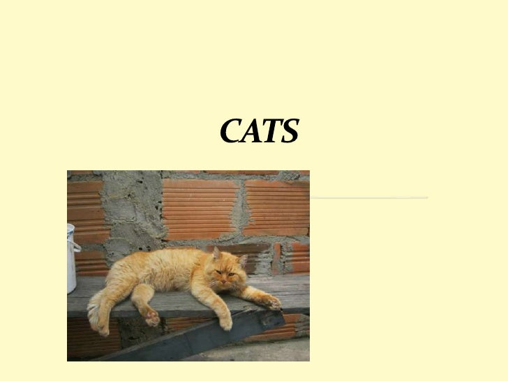 THE CATS ARE PERFECT PETS FOR SMALLAPARTMENTS                           THEY DO NOT                           OCCUPY      ...