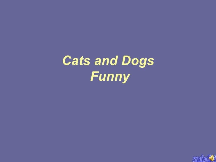 Cats and Dogs Funny
