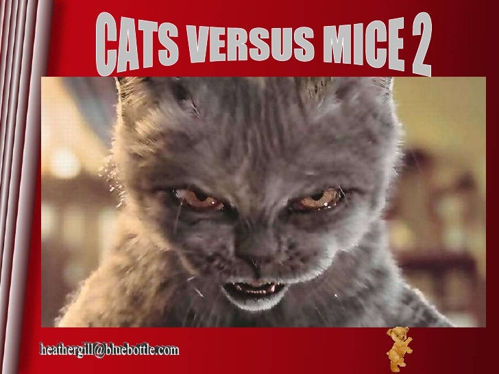 Cats Versus Mice 02
