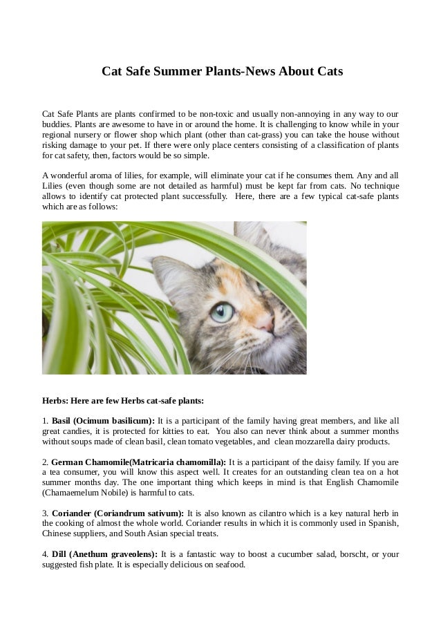 latest information about cats and cat safe summer plants. Black Bedroom Furniture Sets. Home Design Ideas