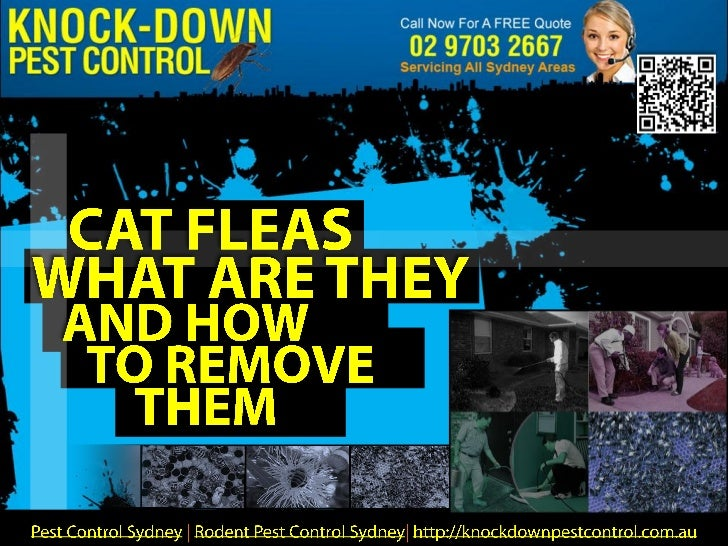 There are 2,500 species of fleas in the world. Most of them arefound on mammals and few on birds. These external parasites...