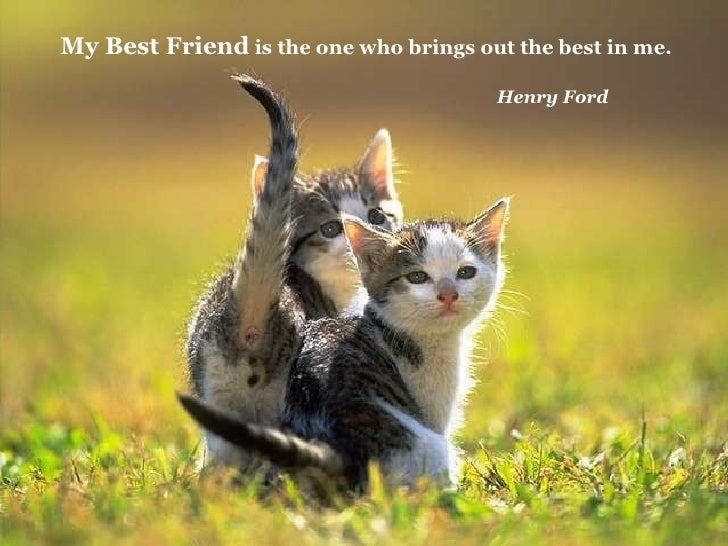 Image result for thank you for your friendship cat images