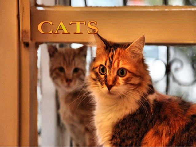 Cats photography (catherine)