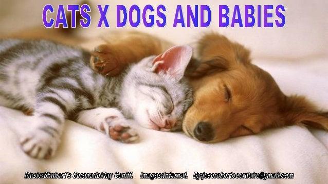 Cats x dogs and babies.jr cordeiro