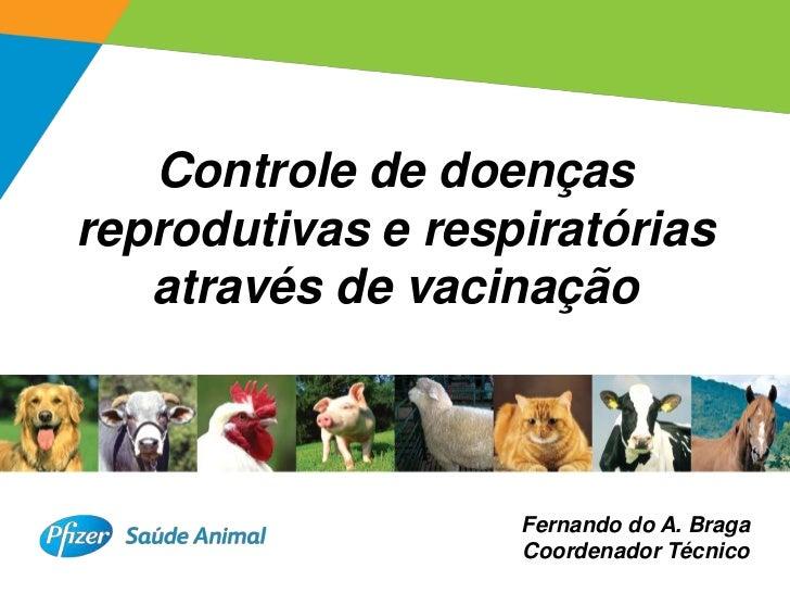 Controle de doençasreprodutivas e respiratórias   através de vacinação                   Fernando do A. Braga             ...