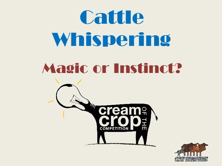 Cattle Whispering by Emma Kay ma kay
