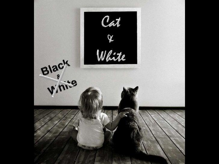 Cat<br />&<br />White<br />Black<br />&<br />White<br />