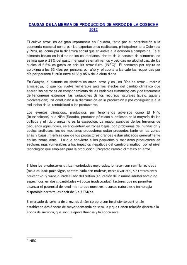 CAUSAS DE LA MERMA DE PRODUCCION DE ARROZ DE LA COSECHA 2012 El cultivo arroz, es de gran importancia en Ecuador, tanto po...
