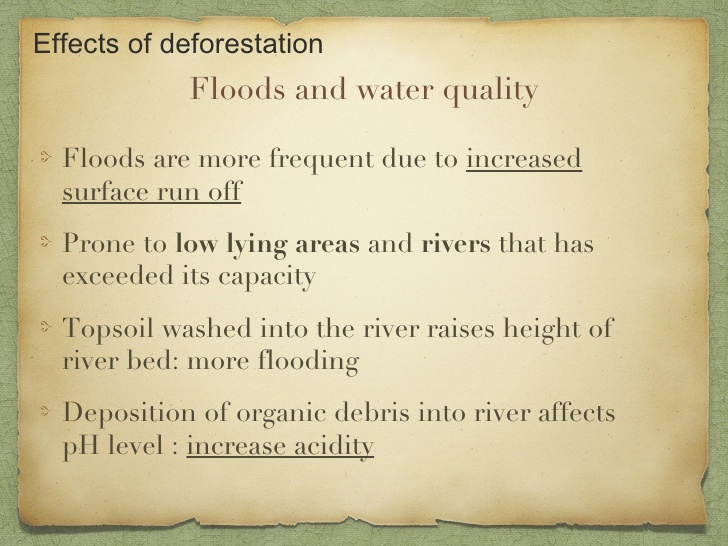speech on hazards of deforestation impact of human activities on essay on effects of deforestation