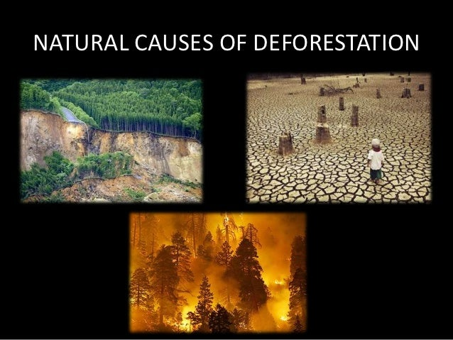 3 DEFORESTATION EXTENT CAUSES AND CONSEQUENCES  Springer