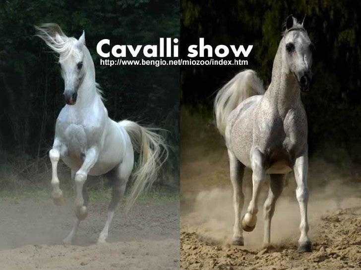 Cavallishow