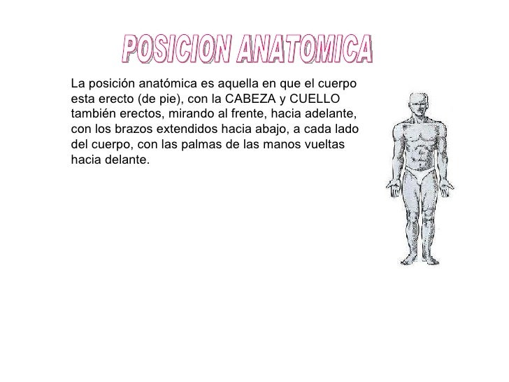 Laseñalando acia  POSICION ANATOMICA La posición anatómica es aquella en que el cuerpo esta erecto (de pie), con la CABEZA...