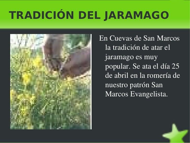 TRADICIÓN DEL JARAMAGO <ul><li>En Cuevas de San Marcos la tradición de atar el jaramago es muy popular. Se ata el día 25 d...
