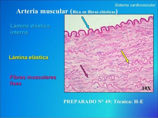 Cbcc4 cardio-respiratorio AÑO 2013