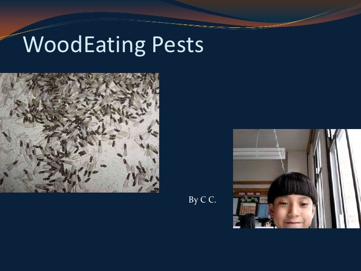 WoodEating Pests<br />By C C.<br />