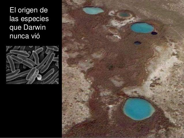 El origen de las especies que Darwin nunca vió