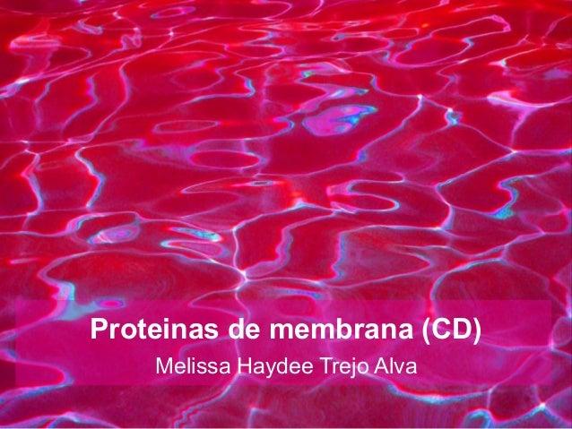 Proteinas de membrana (CD)Melissa Haydee Trejo Alva