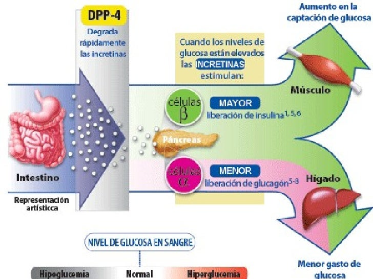 sintesis hormonas esteroideas pdf