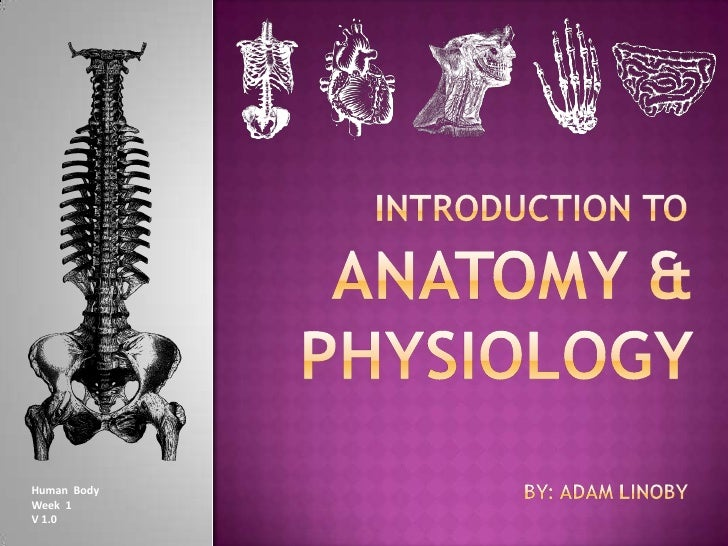 INTRODUCTION TO <br />Anatomy & physiology<br />by: adamlinoby<br />Human  Body<br />Week  1<br />V 1.0<br />