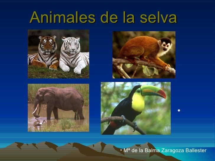 Animales de la selva   <ul><li>Mª de la Balma Zaragoza Ballester </li></ul>